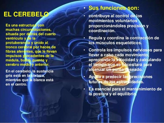 Psicologia Bases Biologicas De La Conducta