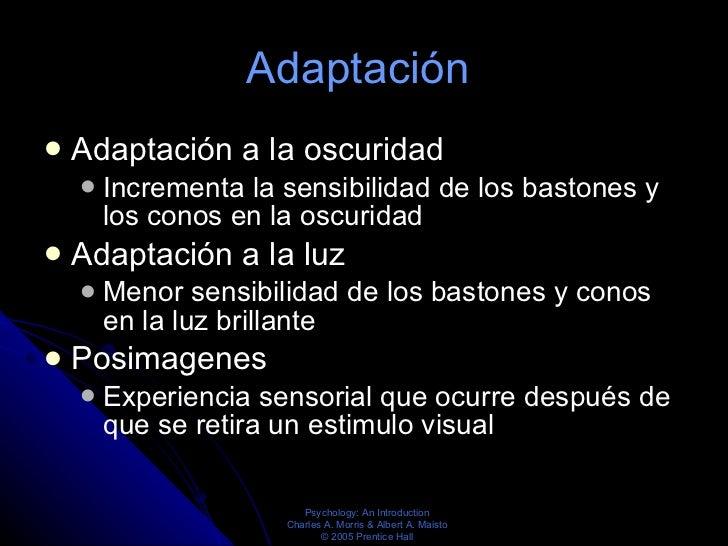 Adaptación  <ul><li>Adaptación a la oscuridad  </li></ul><ul><ul><li>Incrementa la sensibilidad de los bastones y los cono...