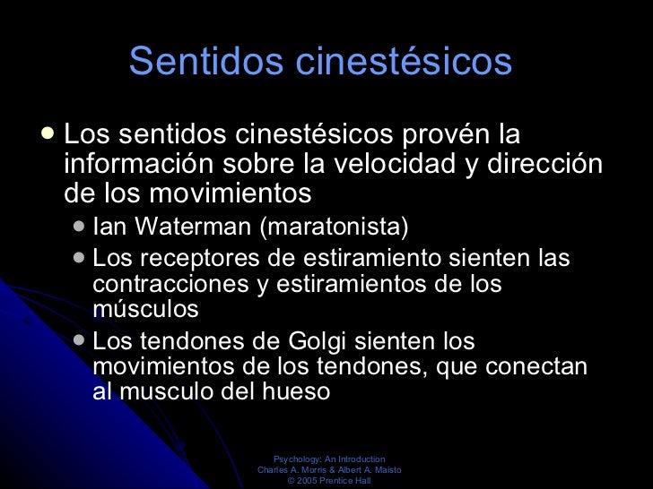 Sentidos cinestésicos  <ul><li>Los sentidos cinestésicos provén la información sobre la velocidad y dirección de los movim...