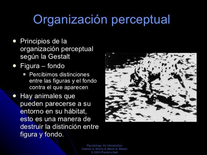 Organización perceptual  <ul><li>Principios de la organización perceptual según la Gestalt </li></ul><ul><li>Figura – fond...