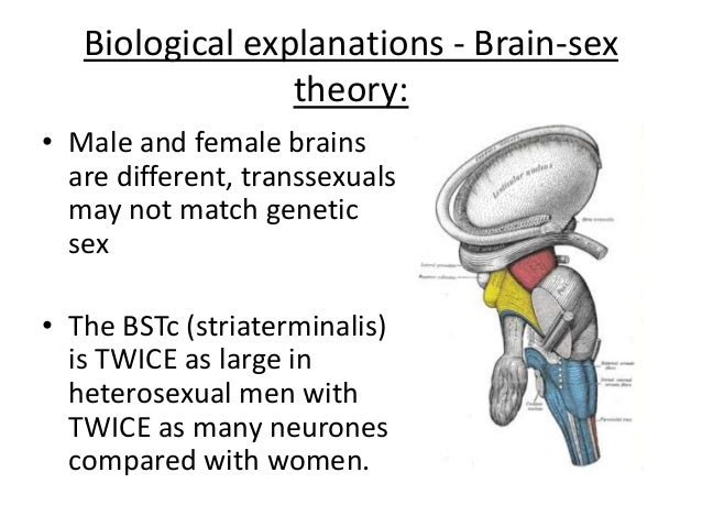 Brain-sex theory of transsexualism