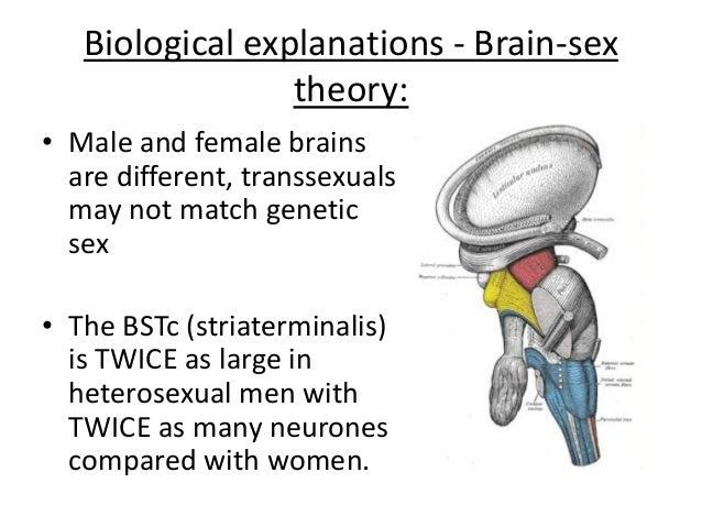 brain sex theory gender dysphoria in Maple Ridzhruen