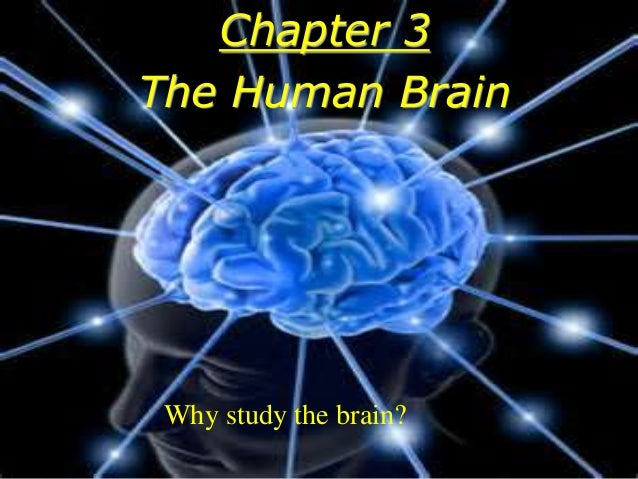 Chapter 3 The Human Brain Why study the brain?