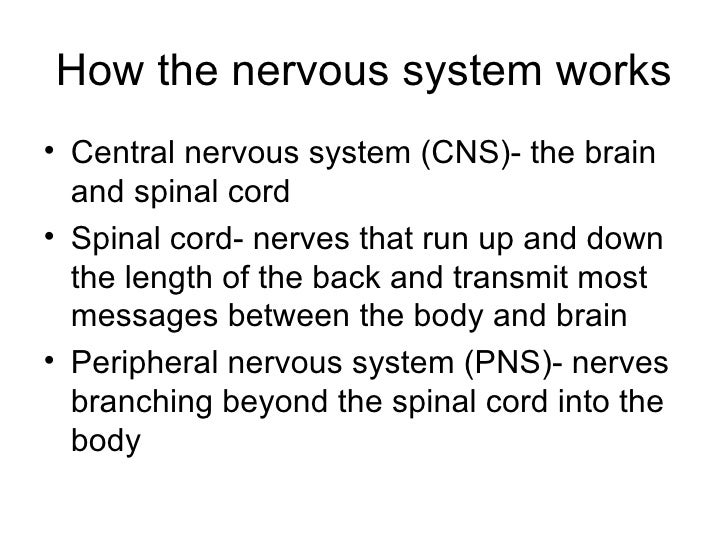 psychology the nervous system The nervous system can be broken down into two major parts—the central nervous system and the peripheral nervous system the central nervous system, the main data center of the body, includes the brain and spinal cord.