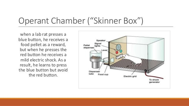 Skinner Box Diagram Related Keywords - Skinner Box Diagram ...