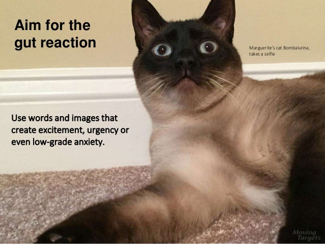 Aim for the gut reaction Use words and images that create excitement, urgency or even low-grade anxiety. Marguerite's cat ...