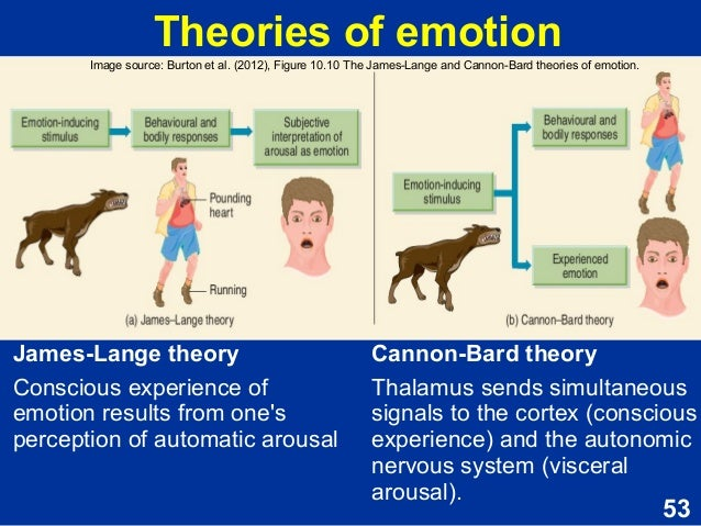 What Is the Cannon-Bard Theory of Emotion?