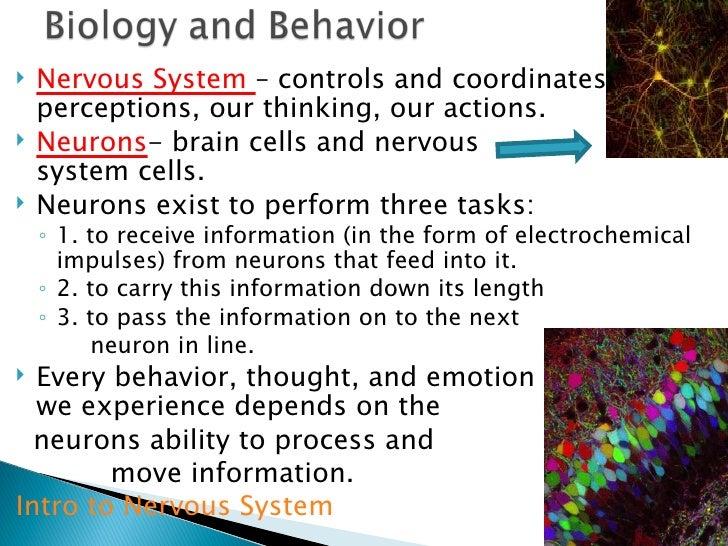 Psychology ch  3 notes bio & behavior