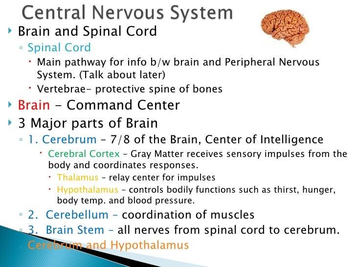 psychology ch 3 notes bio behavior 9 cerebrum and hypothalamus cerebellum definition quizlet