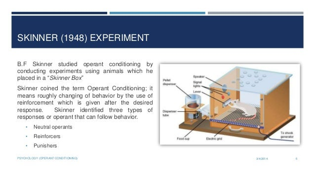 operant conditioning experiment essay Essay operant conditioning ivan pavlov classical conditioning is a we will write a cheap essay sample on essay operant conditioning specifically for you for only $1290/page the most famous experiment for classical conditioning is known as pavlov's dogs.