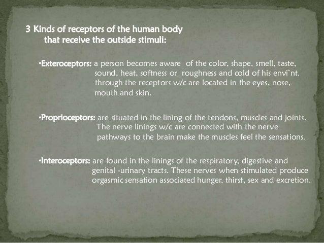 Territorial Behavior Among Human Beings