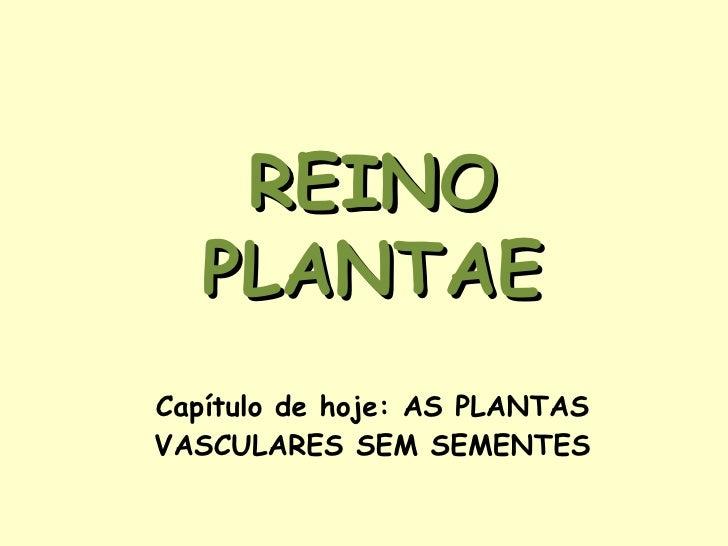 Capítulo de hoje: AS PLANTAS VASCULARES SEM SEMENTES REINO PLANTAE