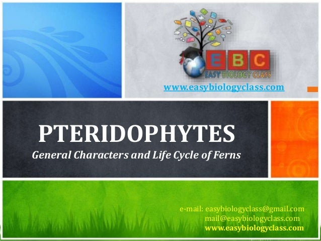 PTERIDOPHYTES General Characters and Life Cycle of Ferns e-mail: easybiologyclass@gmail.com mail@easybiologyclass.com www....