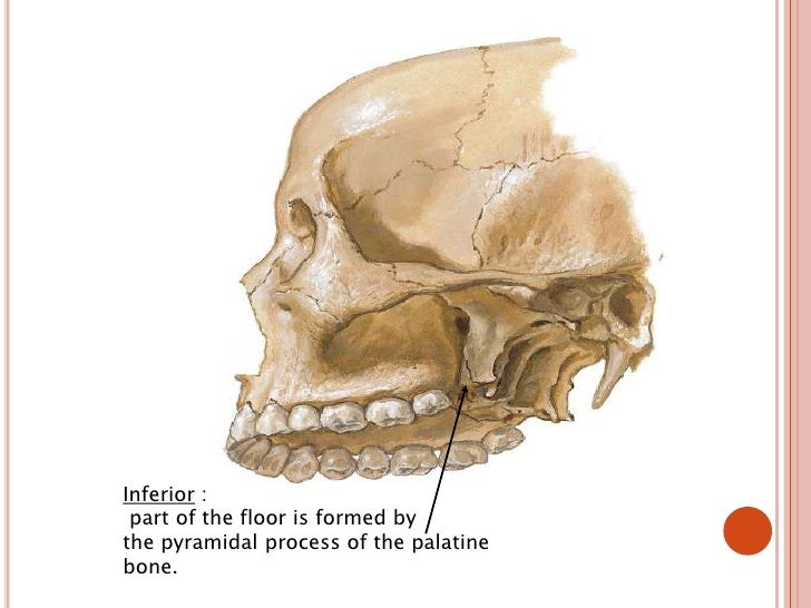 the skull is a complex structure