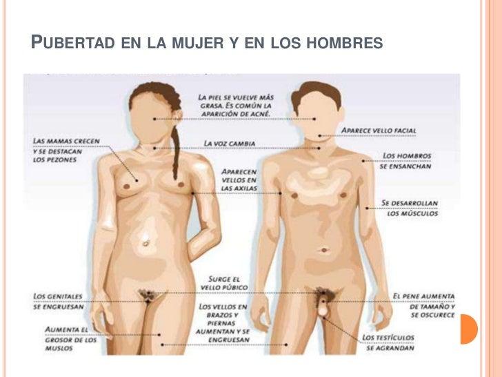Pubertad en la mujer o pubertad femeninaPubertad en la mujer y en los hombres<br />