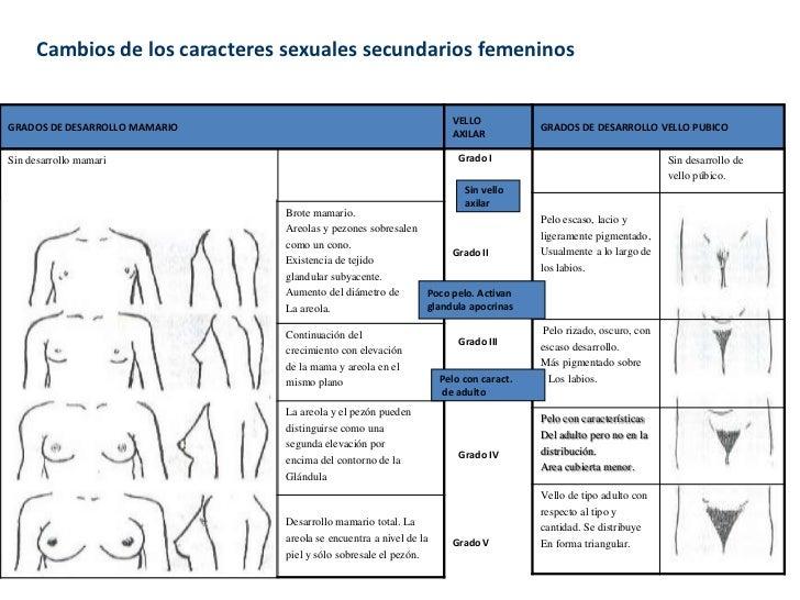 Cambios de los caracteres sexuales secundarios femeninos                                                                  ...