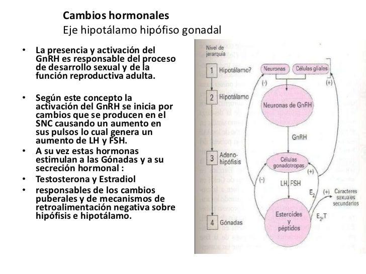 Cambios hormonales         Eje hipotálamo hipófiso gonadal• La presencia y activación del  GnRH es responsable del proceso...