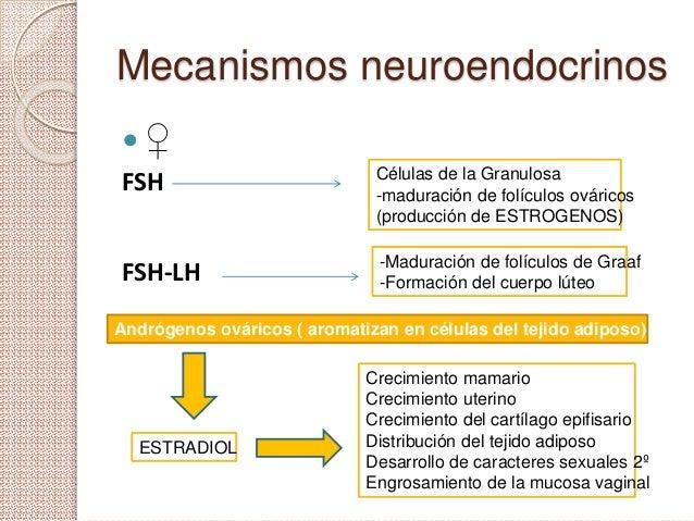 Mecanismos neuroendocrinos ♀ FSH FSH-LH Células de la Granulosa -maduración de folículos ováricos (producción de ESTROGEN...