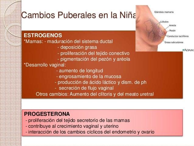 Cambios Puberales en la Niña ESTROGENOS *Mamas: - maduración del sistema ductal - deposición grasa - proliferación del tej...
