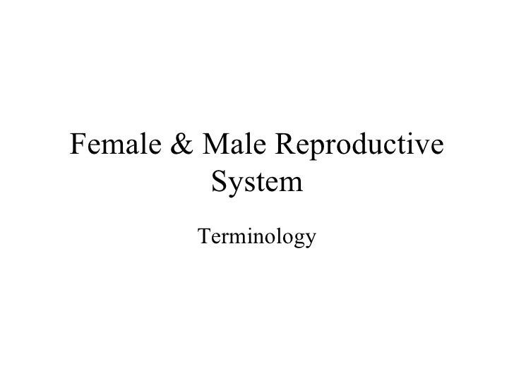 Female & Male Reproductive System Terminology