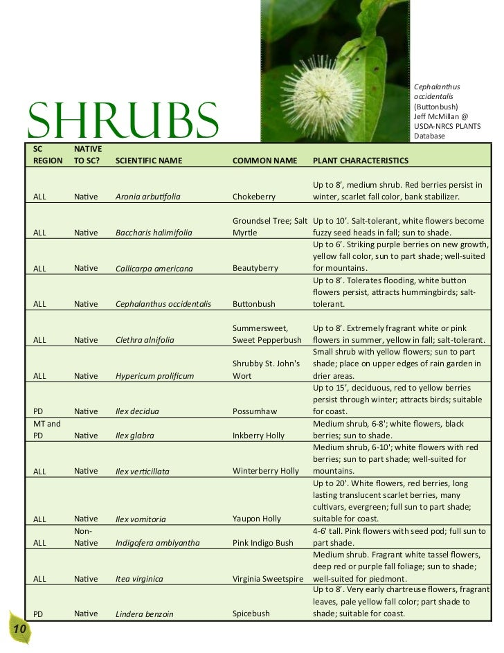 South carolina rain garden manual 9 10 cephalanthus occidentalis shrubs sciox Images