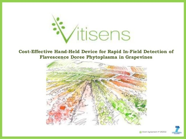 Cost-Effective Hand-Held Device for Rapid In-Field Detection ofFlavescence Doree Phytoplasma in Grapevines