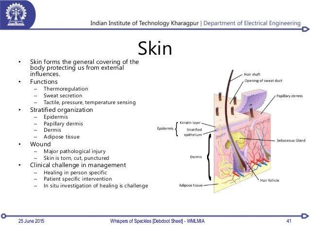 Skin• Skin forms the general covering of the body protecting us from external influences. • Functions – Thermoregulation –...