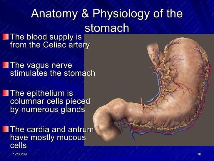 gastritis bei schwangeren behandlung corpus.jpg