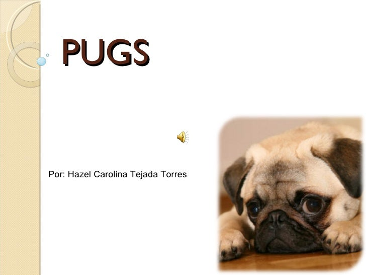 PUGS Por: Hazel Carolina Tejada Torres