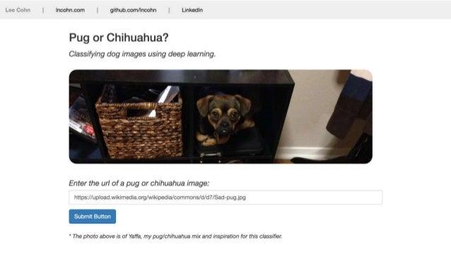 Pug vs Chihuahua SlideShare