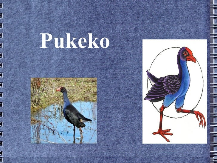Pukeko