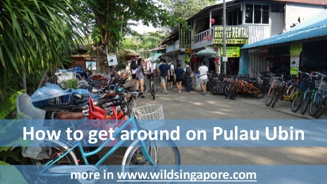 How to get around on Pulau Ubin  more in www.wildsingapore.com