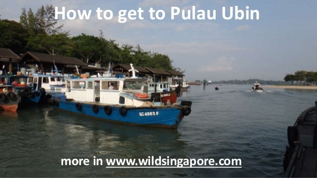 How to get to Pulau Ubin more in www.wildsingapore.com