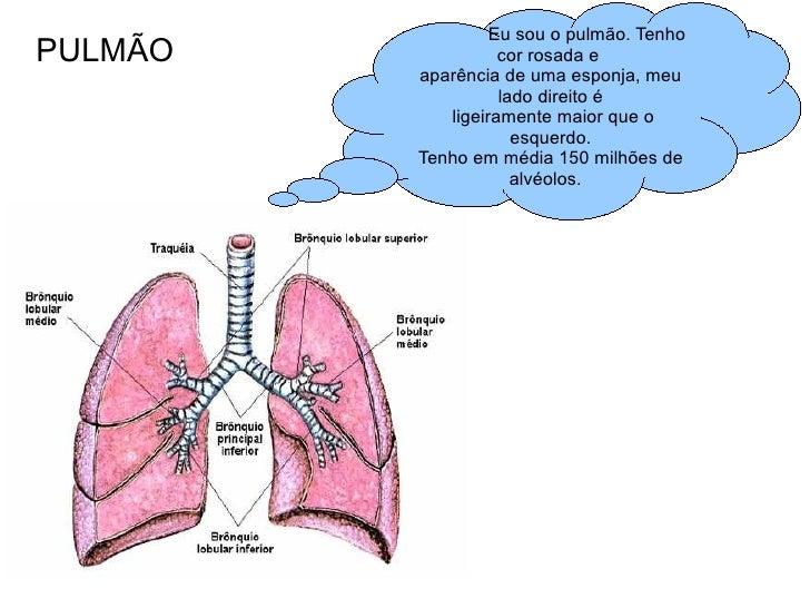 PULMÃO Eu sou o pulmão. Tenho cor rosada e  aparência de uma esponja, meu lado direito é ligeiramente maior que o esquerdo...