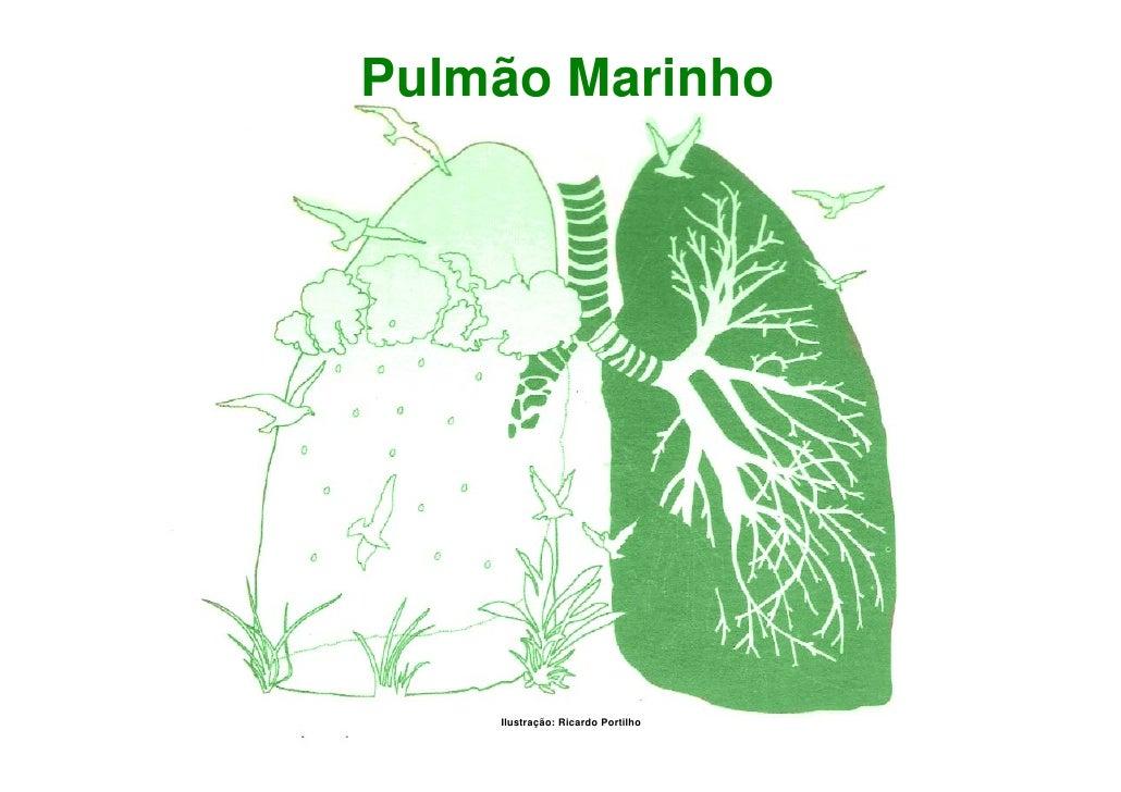 Pulmão Marinho         Ilustração: Ricardo Portilho