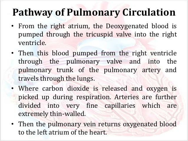 Pulmonary and systemic circulation