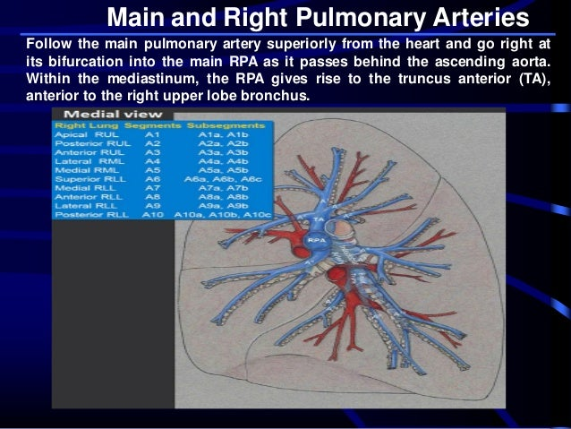 Pulmonary arteries anatomy