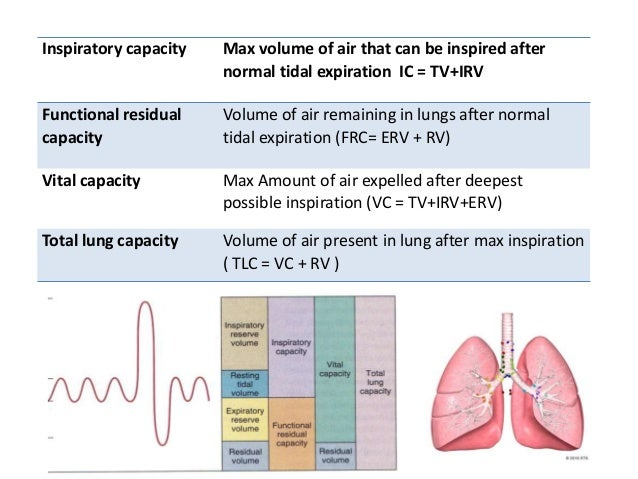 Dynamic lung volumes • Forced vital capacity or FVC • The forced expiratory volume in 1 second (FEV1) • Peak expiratory fl...