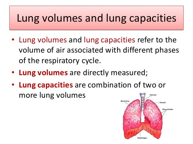Lung volumes • Static Lung volumes: volumes & capacities • Depend on Expiration & inspiration but not on the rate. • Dynam...