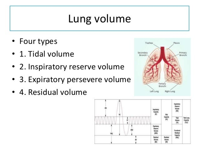 Tidal volume Normal volume of air inspired or expired during quiet breathing (500 mL in males and 400 mL in females )TV = ...