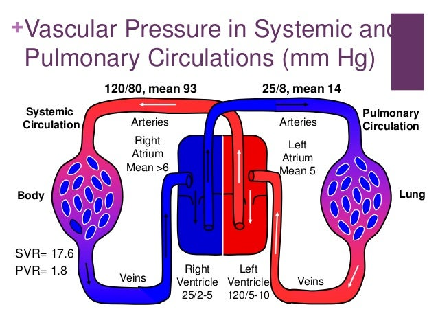 Cardiovascular system during exercise