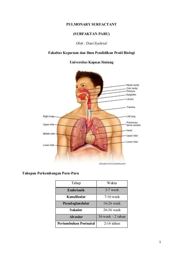 Pulmonary Surfactant Surfaktan Paru Paru