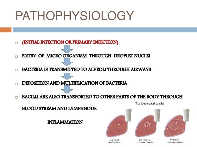 Pathophysiology of meningitis