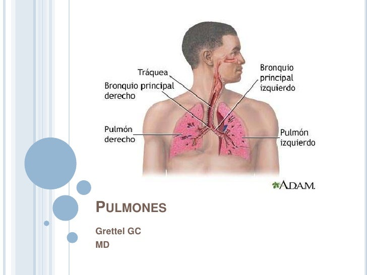 Pulmones<br />Grettel GC<br />MD<br />
