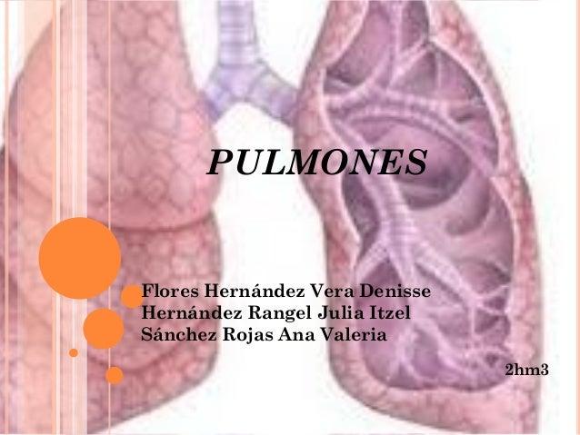 PULMONES Flores Hernández Vera Denisse Hernández Rangel Julia Itzel Sánchez Rojas Ana Valeria 2hm3