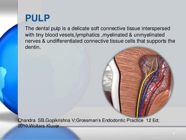 The dental pulp is a delicate soft connective tissue interspersed with tiny blood vesels,lymphatics ,myelinated & unmyelin...
