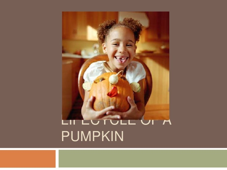 Lifecycle of a Pumpkin<br />
