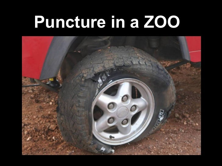 Puncture in a ZOO