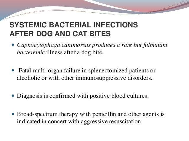 Dog Bite Infection Organism