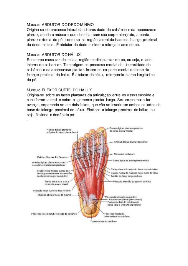 Asombroso Anatomía De Los Dedos Dígitos Bosquejo - Anatomía de Las ...